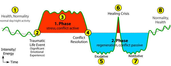 META-Medicine, 2 Phases Health Stress Phase UDIN Trigger Disease Process, Adam Oldmeadow, Melbourne Australia